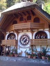 Huge Cuckcoo Clock for Giants