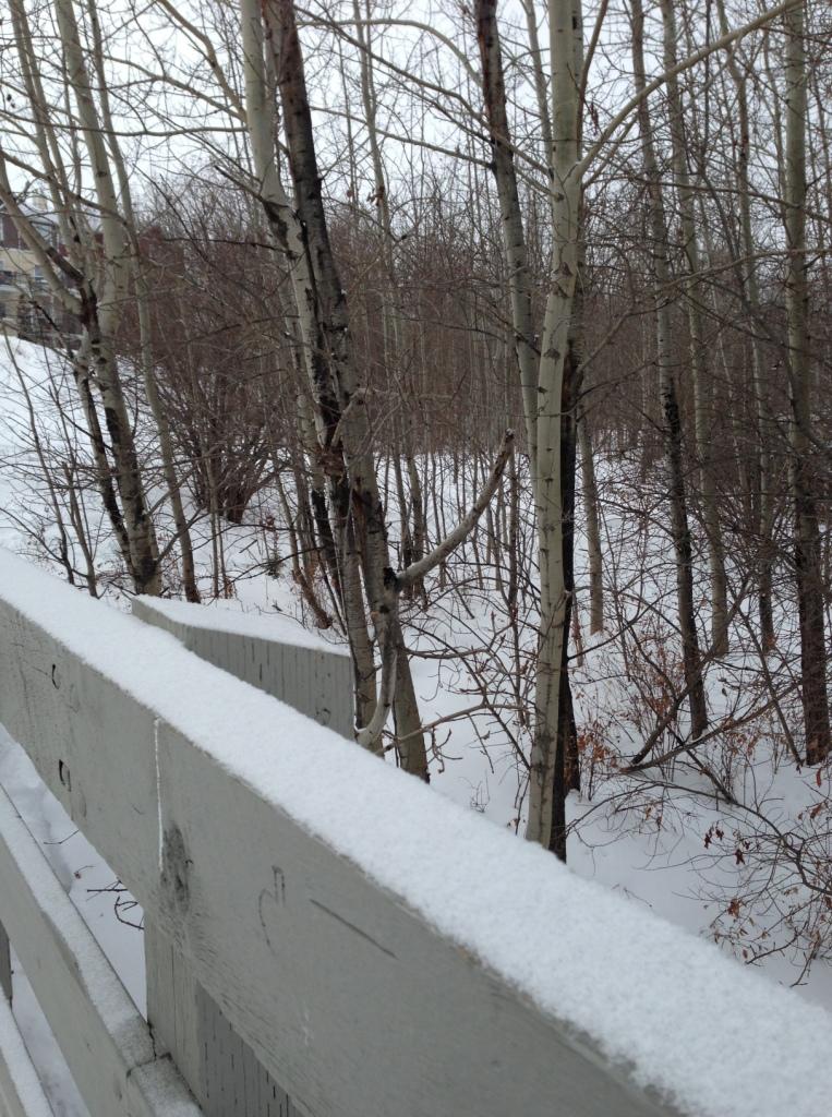 Mill Creek Frozen