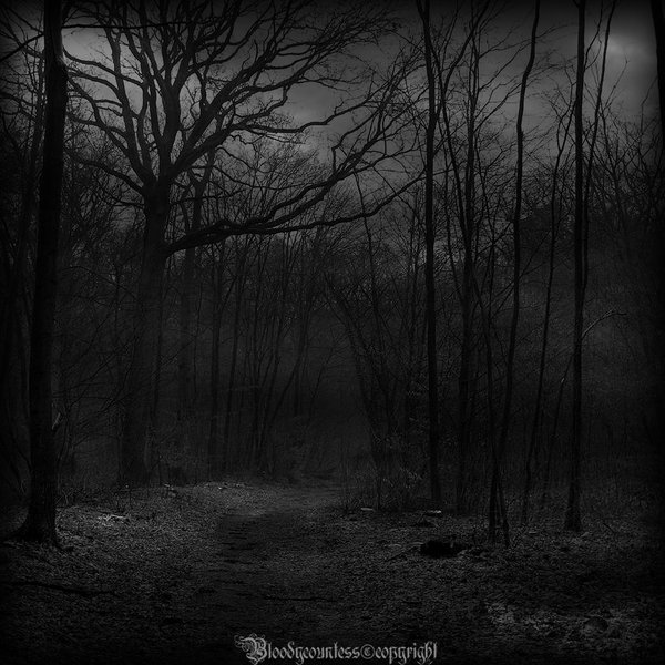in_the_dark_forest_v_by_countessbloody